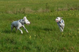Lina und Finley rennen über die Wiese
