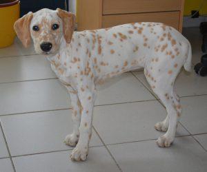 Jolie Chérie, 17 Wochen alt, 42,5 cm, 9 kg