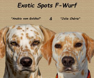 F-Wurf (Collage)